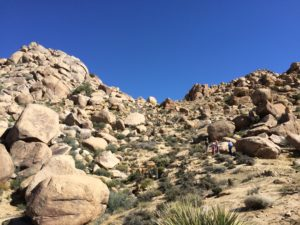 One of our client teams hiling in the California Desert as part of the nature immersion portion of our Career Manifestation Retreat.